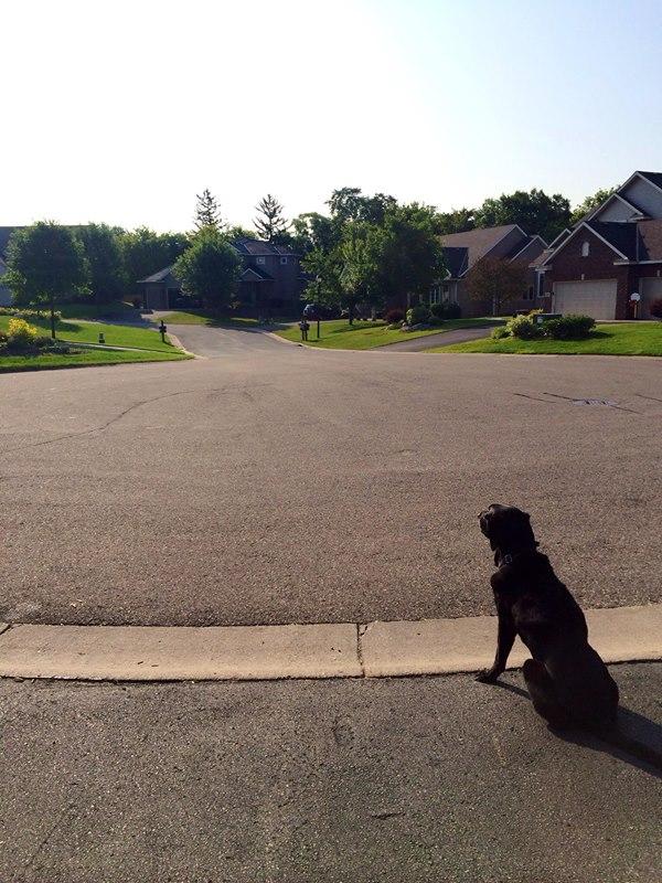 Clark driveway photo